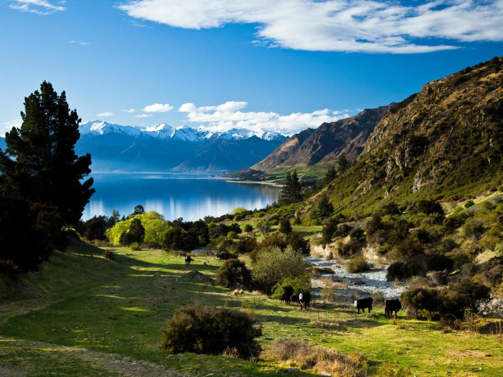 New Zealand Property For Sale For Under Nz